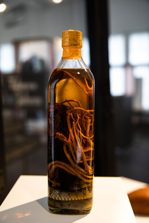 Asiatic water snake, Scorpion and ginseng in alcohol